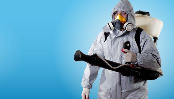 Как избавиться от мокриц в подвале