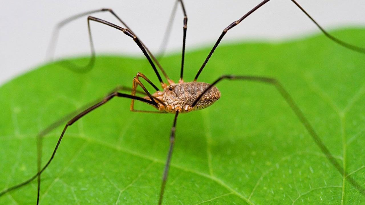 Как избавиться от пауков в доме навсегда: Лучший способ